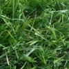 Преимущества искусственной травы